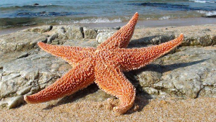 7Фактов о морских звёздах