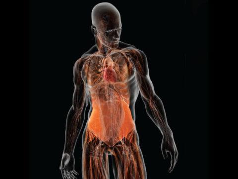 7 фактов о теле человека