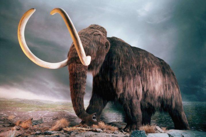 7Фактов про мамонтов