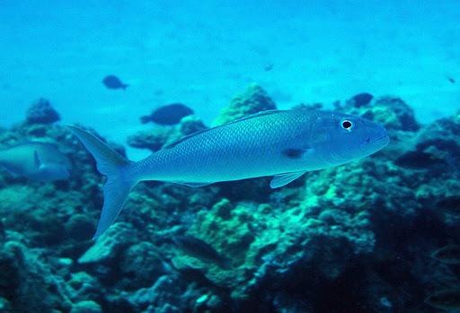 7Фактов про рыбу априона