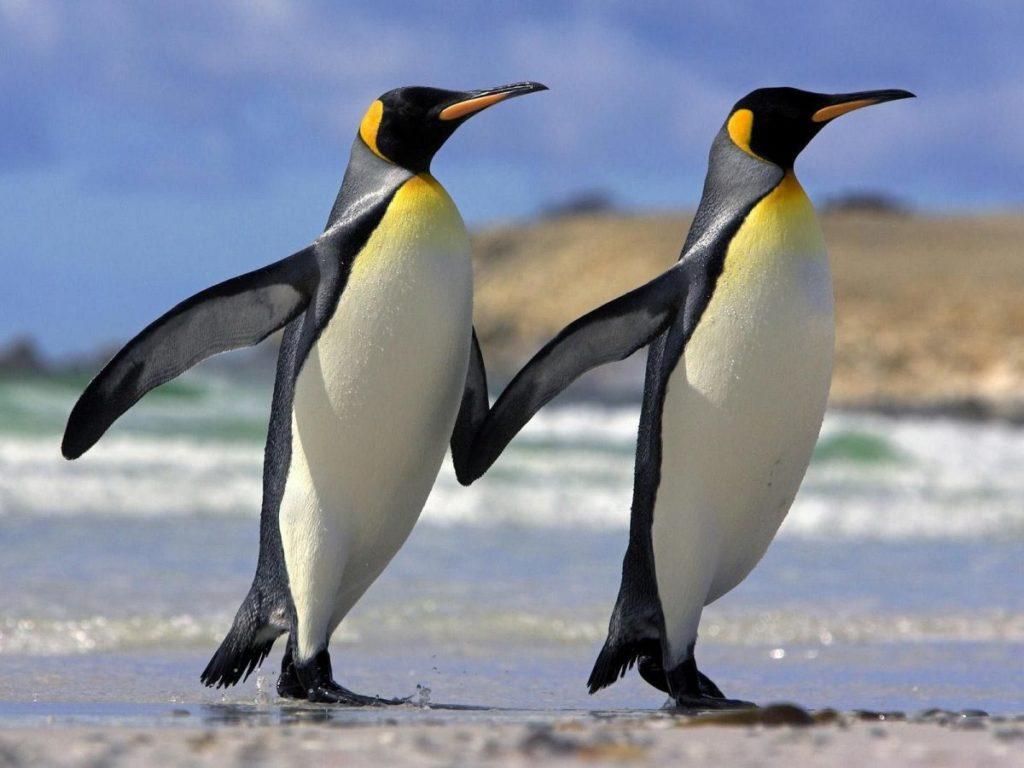 где живут пингвины