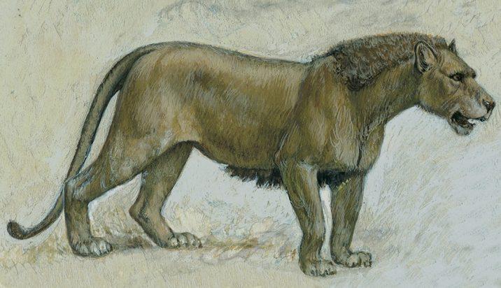 7Фактов о пещерных львах