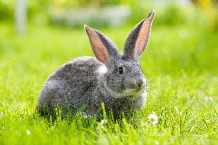 7Фактов о кроликах